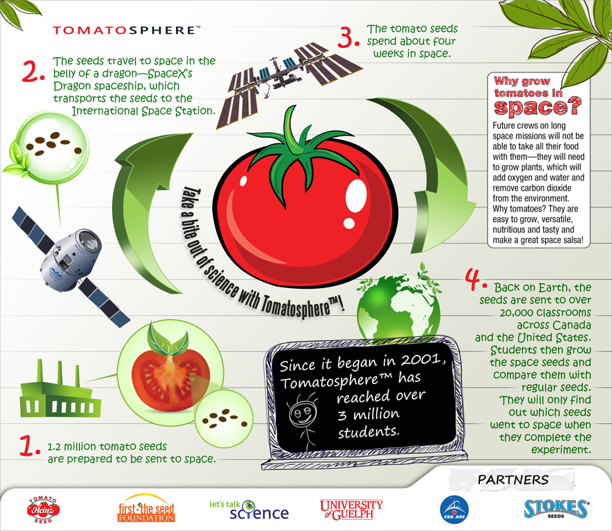 Illustration of the tomato seeds journey. Description follows.