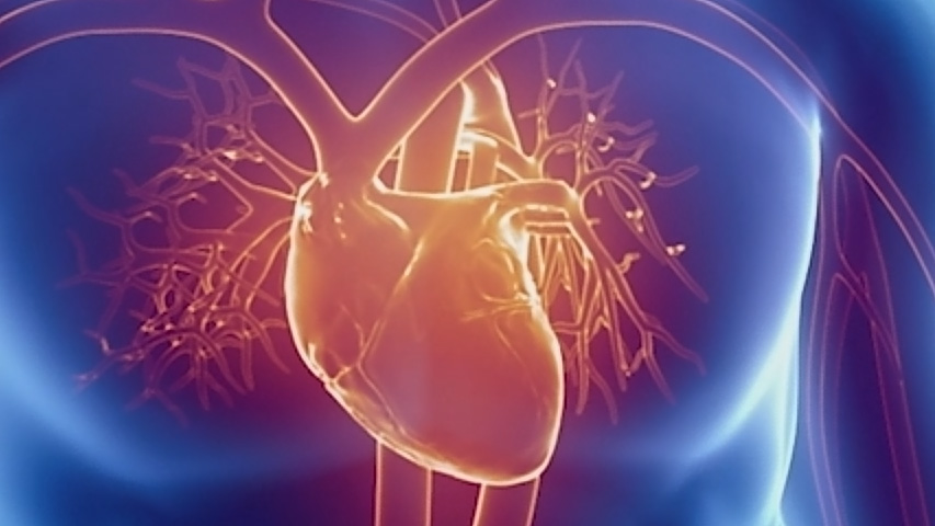 the vascular series studying heart health in space canada ca